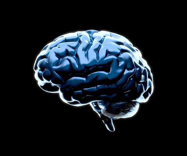Brain_web